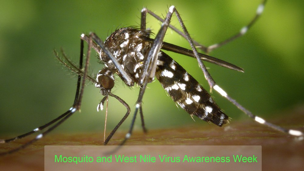 What is Mosquito and West Nile Virus Awareness Week