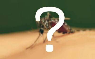 What attracts mosquitoes?