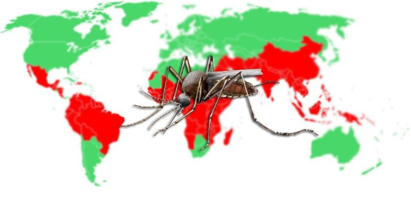 Places with the Largest Mosquito Population