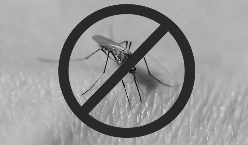 Why don't we just kill all mosquitoes?