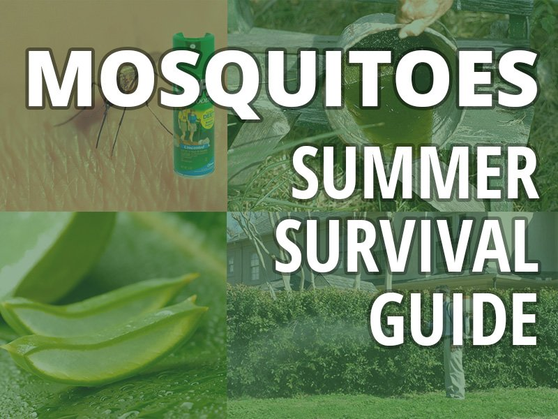 Mosquitoes – Summer survival guide