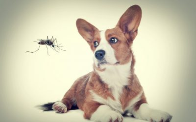 Do mosquitoes bite dogs?