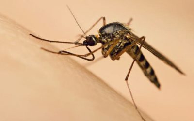 How Did Malaria Came to Be?
