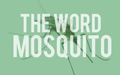 Other uses of the word MOSQUITO