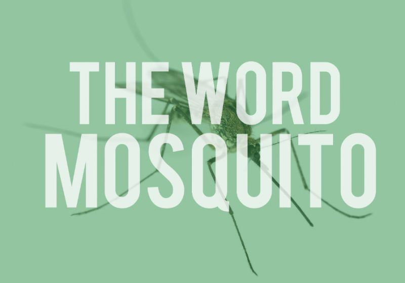 word mosquito