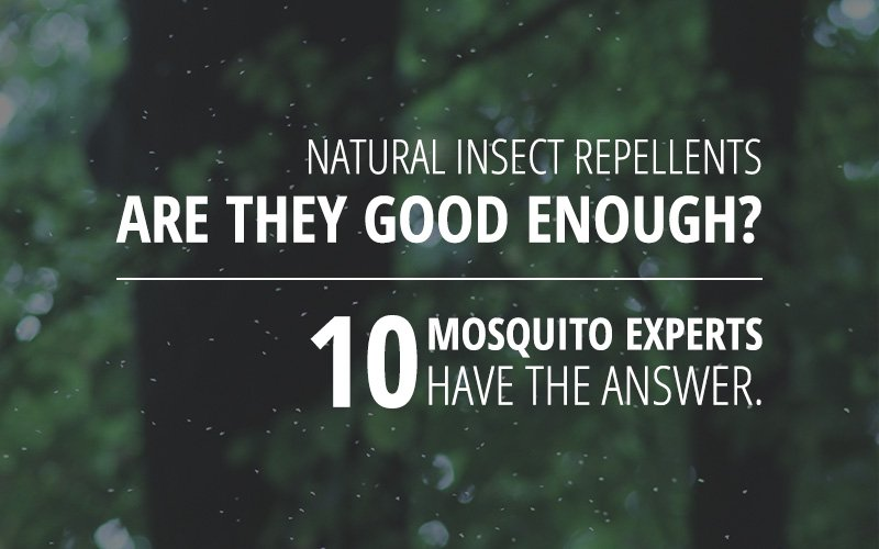 Natural insect repellents – are they efficient enough? These 10 mosquito experts have the answer!