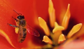insecticide and honeybees