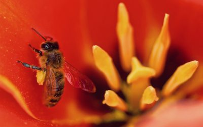 Insecticide, Pesticides and Honeybees