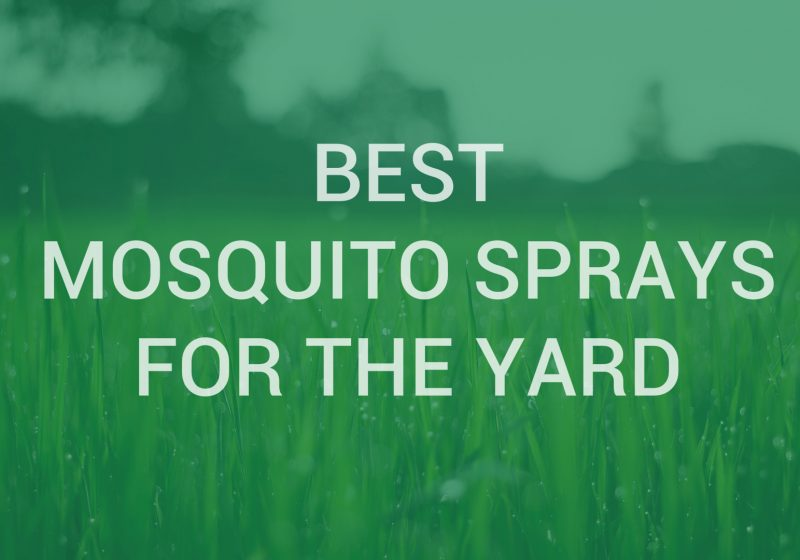 Mosquito sprays for yard
