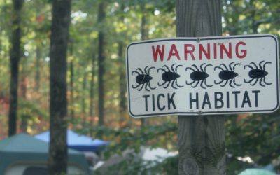 The other pests you should watch out for in the summer – ticks