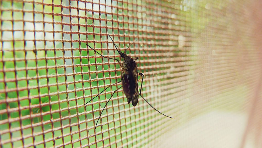 Biggest myths about mosquitoes