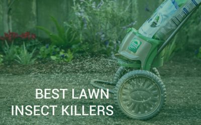 Lawn pest control – Best lawn insect killers