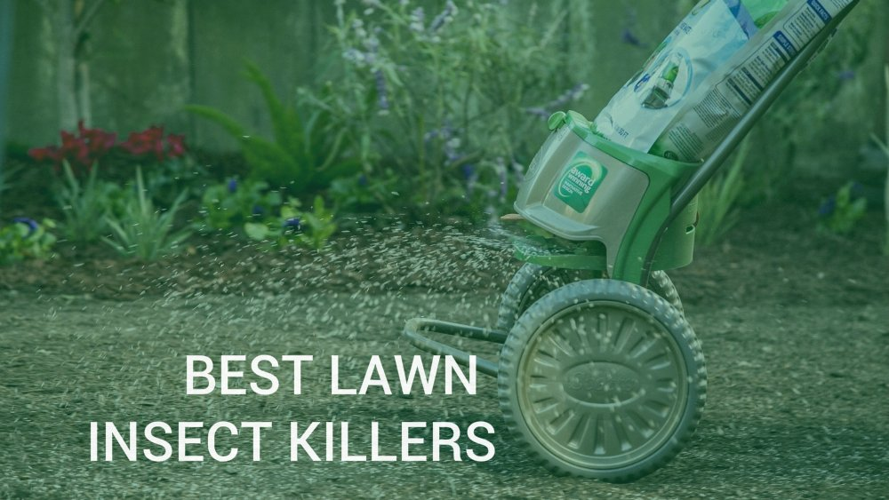 Lawn Pest Control Best Insect S