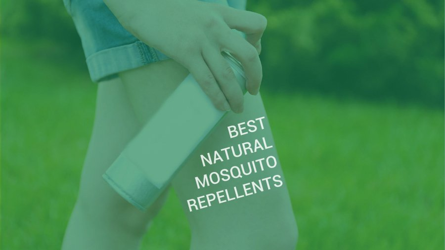 best natural mosquito repellents Best insect repellent from will dictate the type of insect repellent that will work the best for natural insect repellents can't be used on.