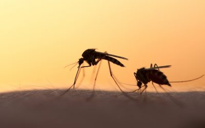 Is climate change making mosquito season longer?