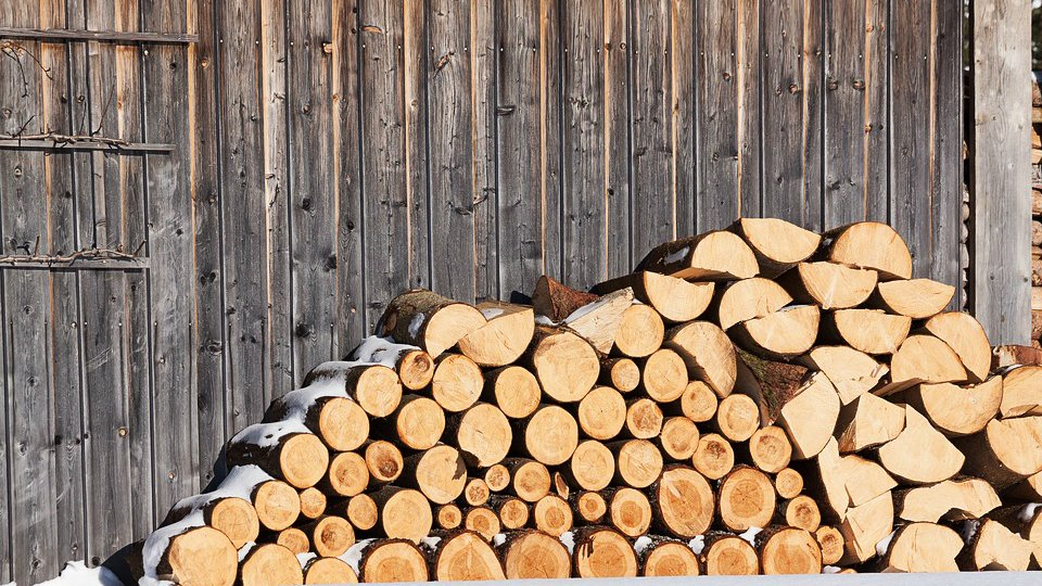 How to get rid of insects in firewood