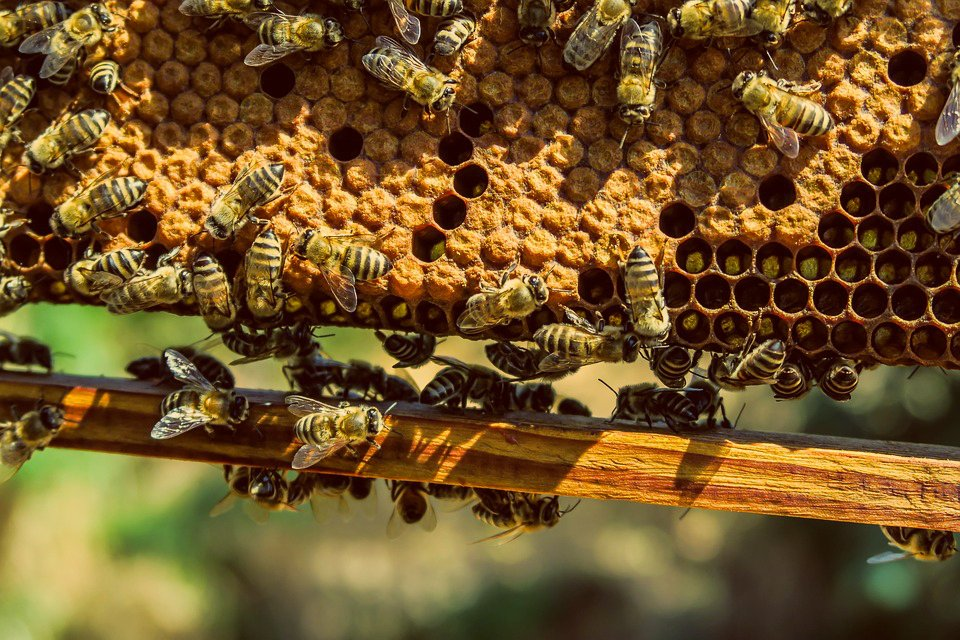 How to protect honey bees when fighting mosquitoes