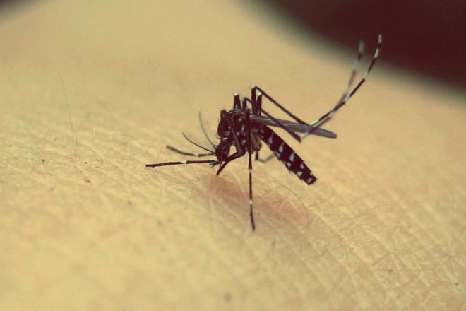 mosquito attract