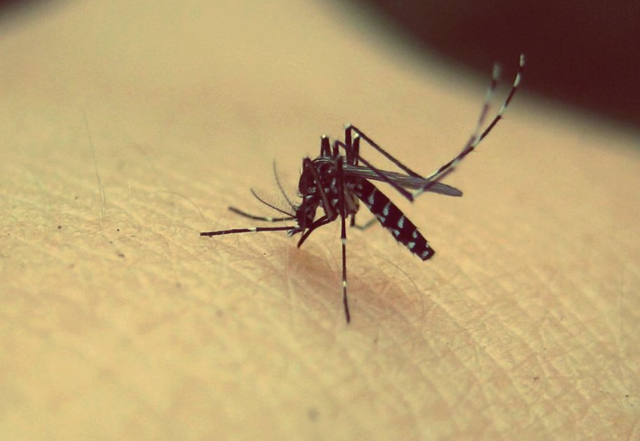 How mosquitoes locate us in the dark?