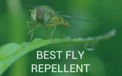 Best fly repellents