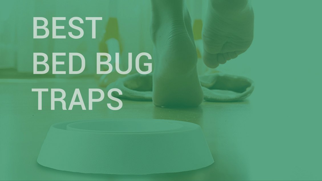 Best bed bug detectors