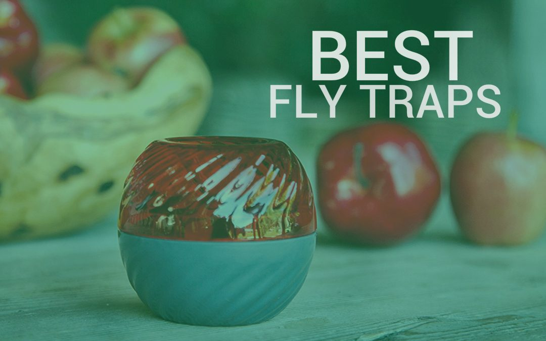 Best Fly Traps