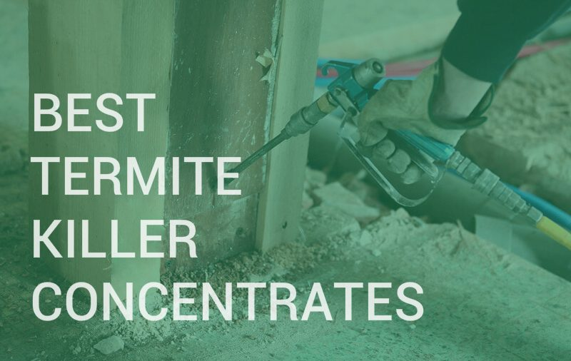 Best termite killer concentrates