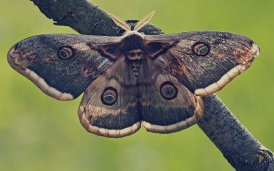 Types of Moths and How Best to Fight Each Type