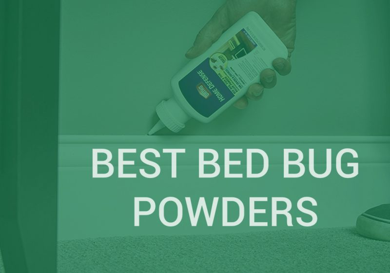 Bed Bug Powder