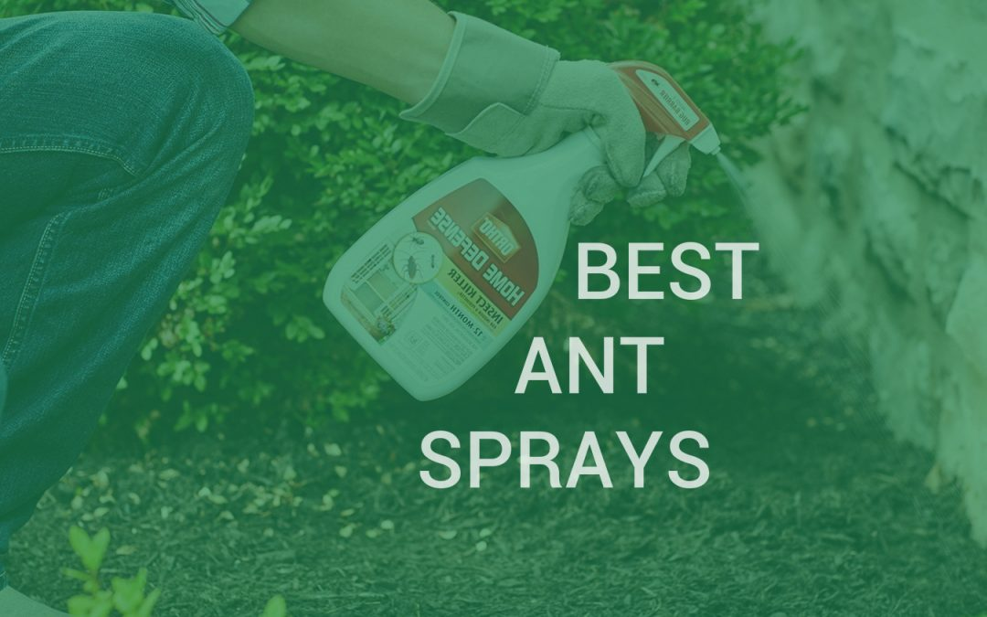 Best ant killer sprays