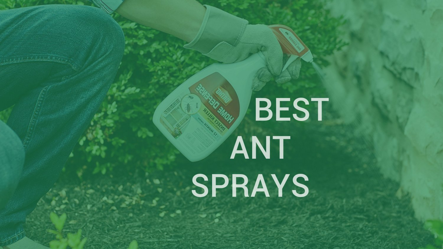 best ant sprays