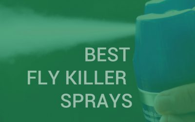 Best fly killer sprays