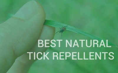 Best Natural Tick Repellents