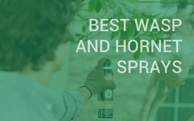 Best Wasp And Hornet Sprays