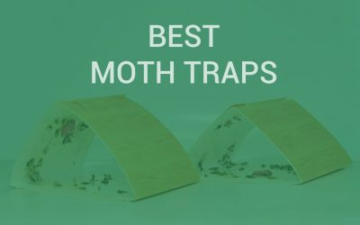 Best Pantry Moth Traps