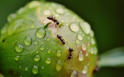 Most Common Types of Ants and How to Get Rid of Them