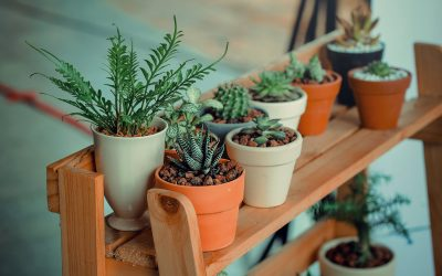 Outdoor Plants That Repel Ants