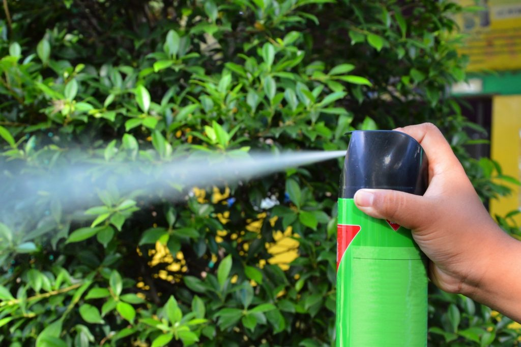 spraying fly killing spray