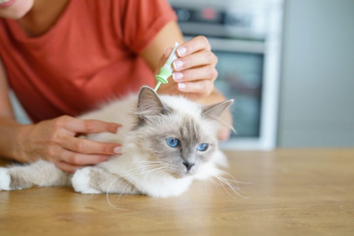 woman applying a flea treatments to a cats