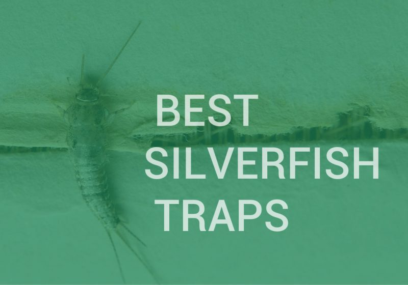 Best silverfish traps