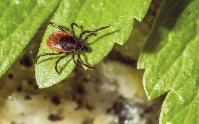 Tick Control Tips for Your Yard (+Infographic)