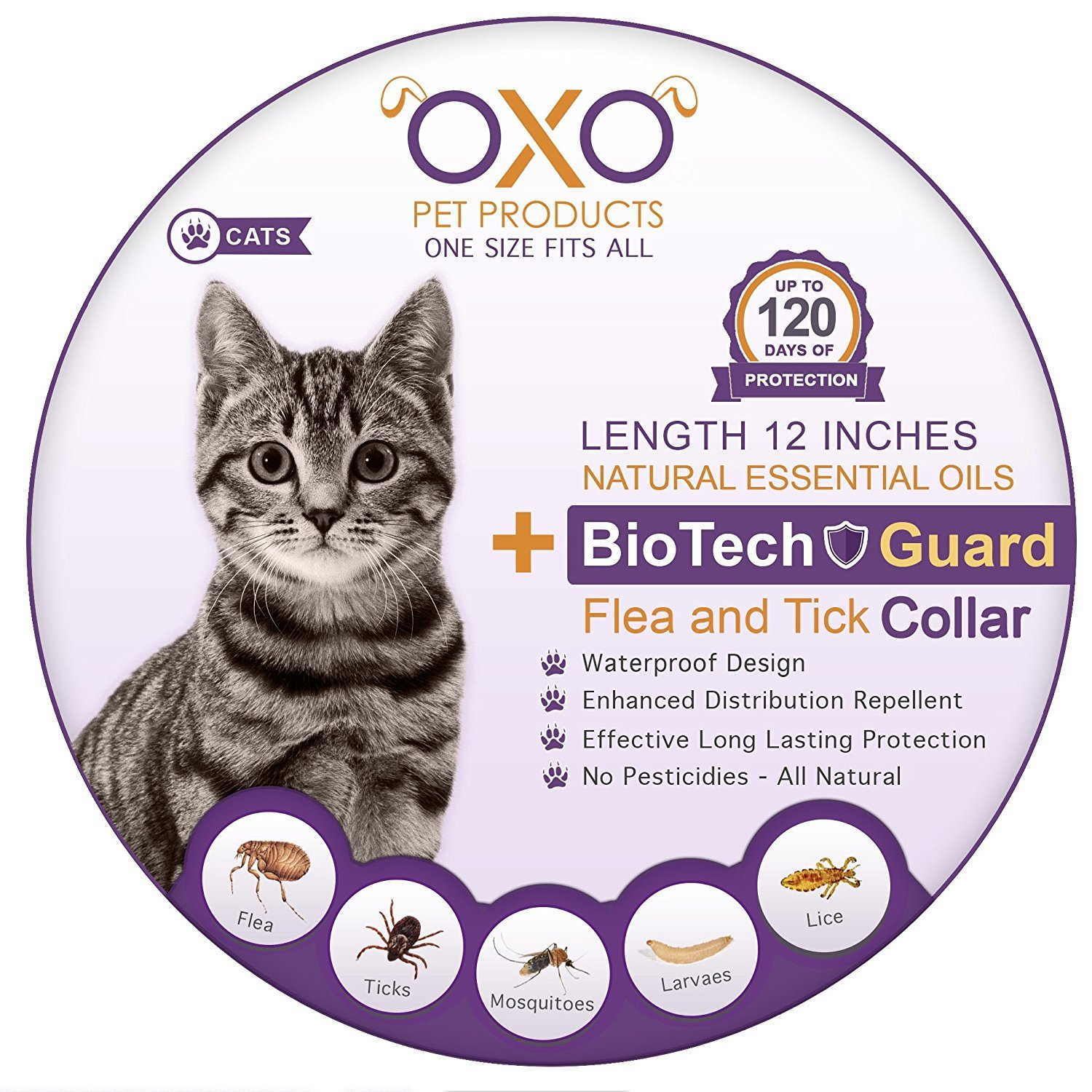 Best Flea Collars For Cats | INSECT COP