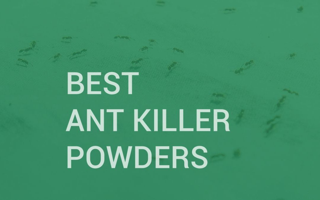 Best Ant Killer Powders