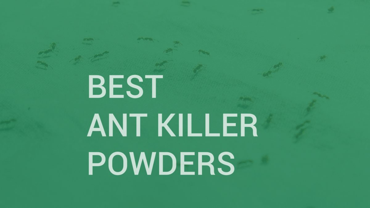 Best Ant Killer Powders | INSECT COP
