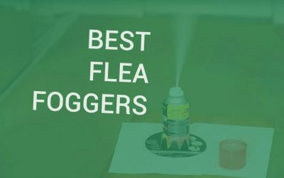 Best Flea Bomb Foggers