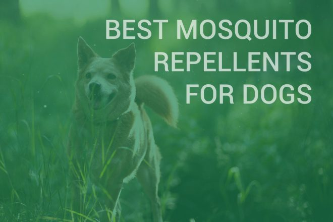 Best mosquito repellent for dogs