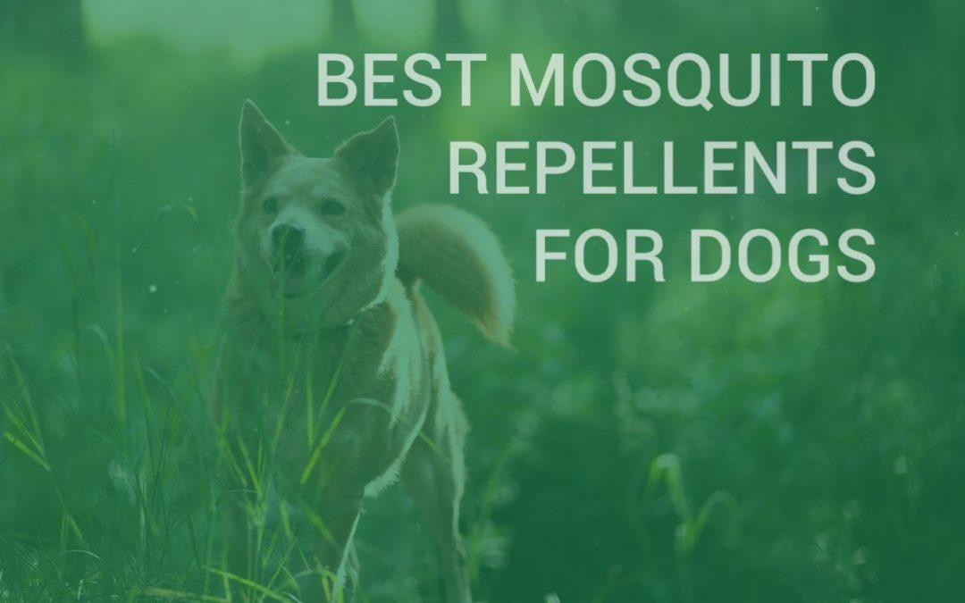 Best Mosquito Repellents for Dogs