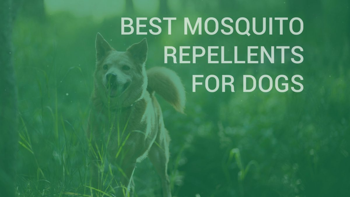 Best Mosquito Repellents For Dogs Insect Cop