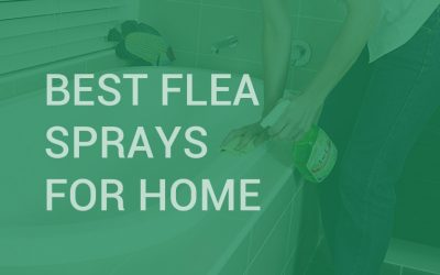 Best Flea Sprays for Home