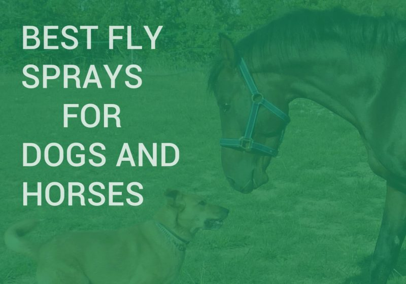 best fly sprays for horses and dogs